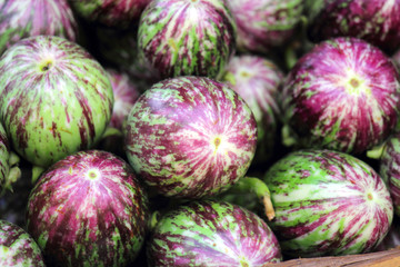 Brinjals, Eggplant Solanum melongena