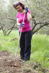 Mid aged woman raking in olive plantation