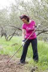 Mid aged woman raking in olive plantation