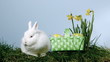 Basket of easter eggs falling next to bunny over grass