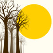Tree silhouette, outline on white and sun