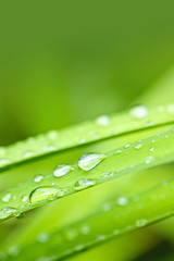Water drops on grass blade