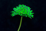 Green flower on black background