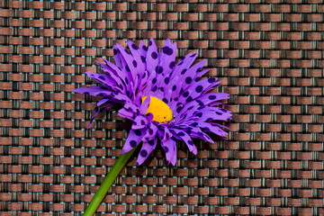Purple flower on textured background