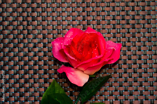 Pink rose on textured background