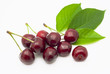 Ripe, juicy cherries on a white background