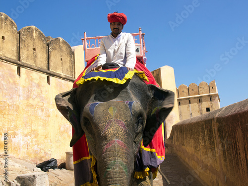 canvas print picture elephant
