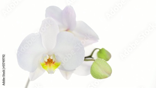 White orchid with drop of water on white background