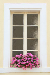 Window decorated with flower, Burgundy, France