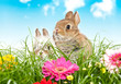 Baby Kaninchen au einer Blumenwiese