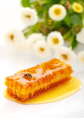 Honeycomb with working bee