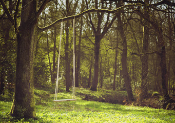 Romantic scene of a swing hanging from tree branch
