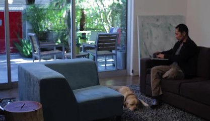 Japanese couple working and using cell phone at home with dog