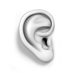 human ear isolated