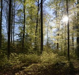 soleil dans le sous bois