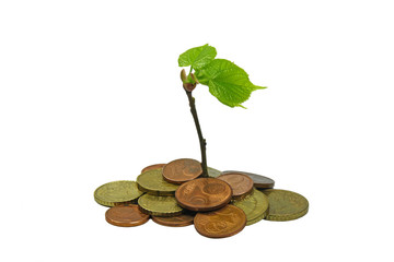 green plant growing from pile of coins
