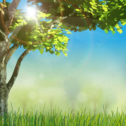 grass nature with sun