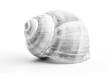 Snail shell. Shallow depth of field.