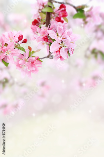 Spring Tree Blossoms