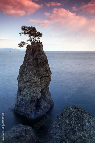 L'arbre sur le rocher en Italie