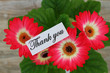 Thank you note with Gerbera daisies