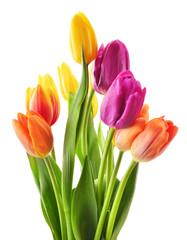 Bouquet of tulips on white background. Tulipa