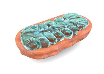 Mitocondrio sezione, cellula