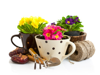 spring flower in pot with garden tools isolated on white