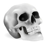 Skull (vector illustration)
