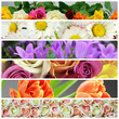 Colorful flower collage
