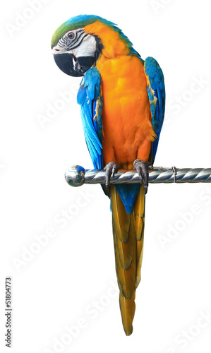Poster Papegaai Colorful red parrot macaw isolated on white background