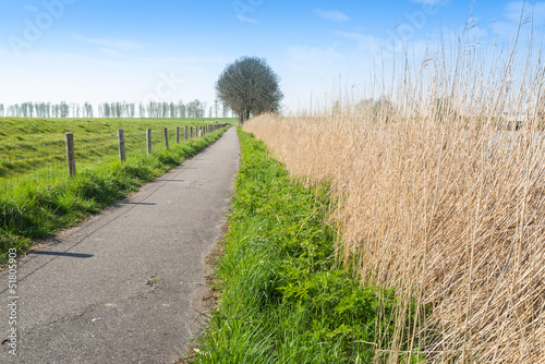 Narrow path in a rural area in the spring season
