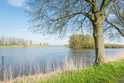 Budding trees along a lake in springtime