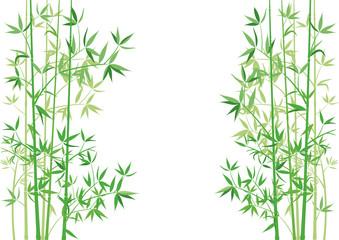 Bambus Zweige