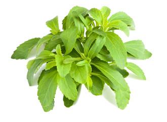 stevia bunch