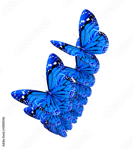 Fotobehang Vlinder Blue butterflies isolated on white background