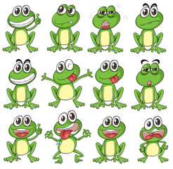 Different faces of a frog