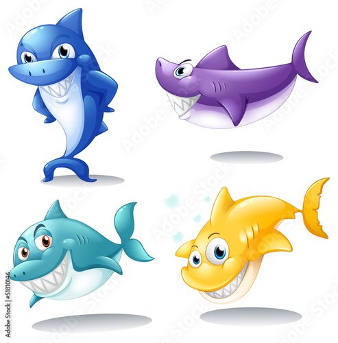 A group of sharks