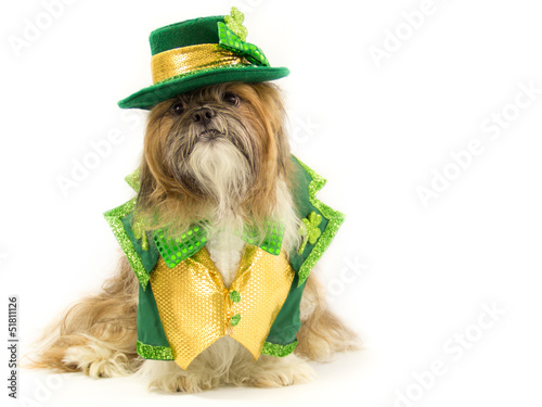 Irish Doggy