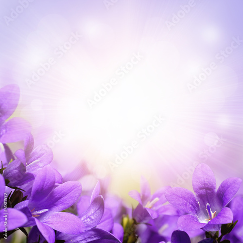 Foto op Canvas Lilac Campanula spring flowers design border background