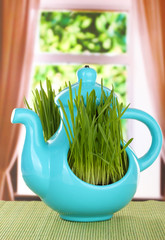 Green grass in decorative pot on window background