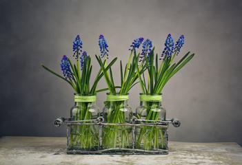 Hyacinth Still Life