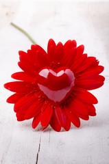 gerbera con cuore rosso