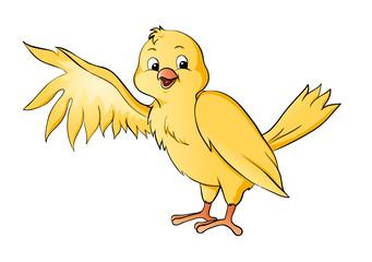Vogel Kanarienvogel Kanarie