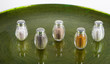 Salini vari su vassoio verde