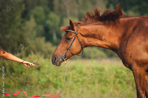girl feeding a horse hay