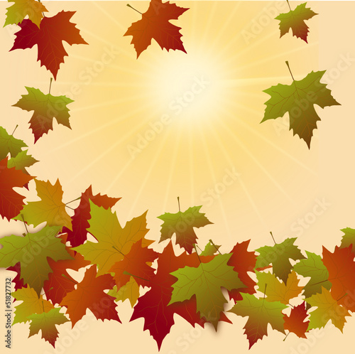 Fallendes Laub in der Herbstsonne
