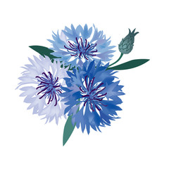 flower bouquet. vector illustration blue cornflower isolated