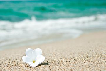 砂浜とプルメリア