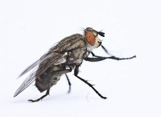 mosca tocando palmas